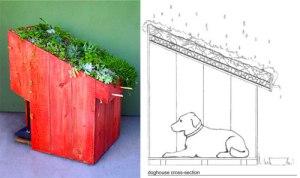 sustainable-pet-design
