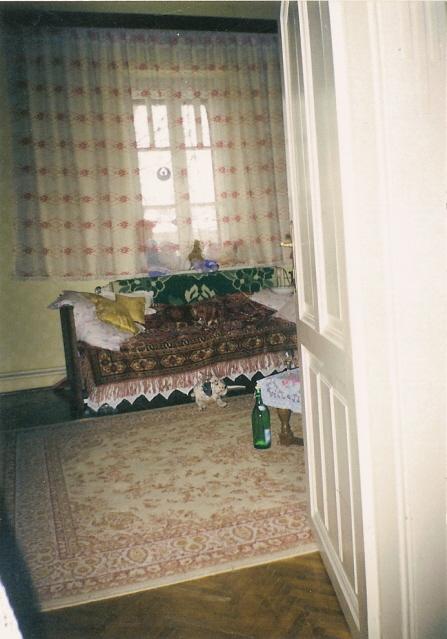 Pongo - Ganduri din mansarda, un an din viata