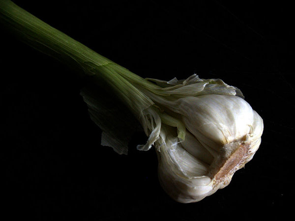 20 plante anti-tantari din gradina - usturoi