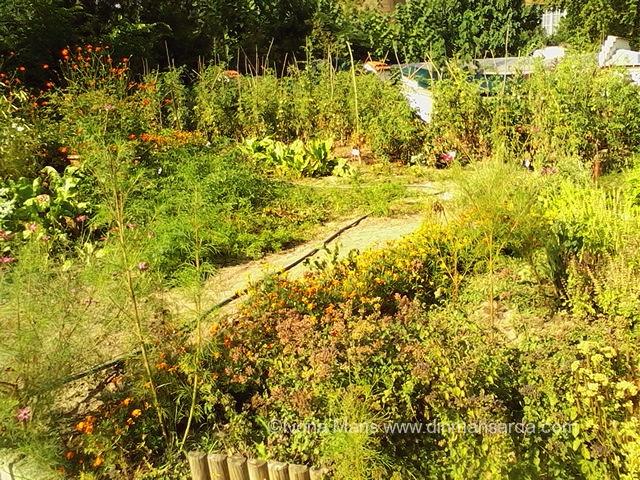 gradina botanica bucuresti
