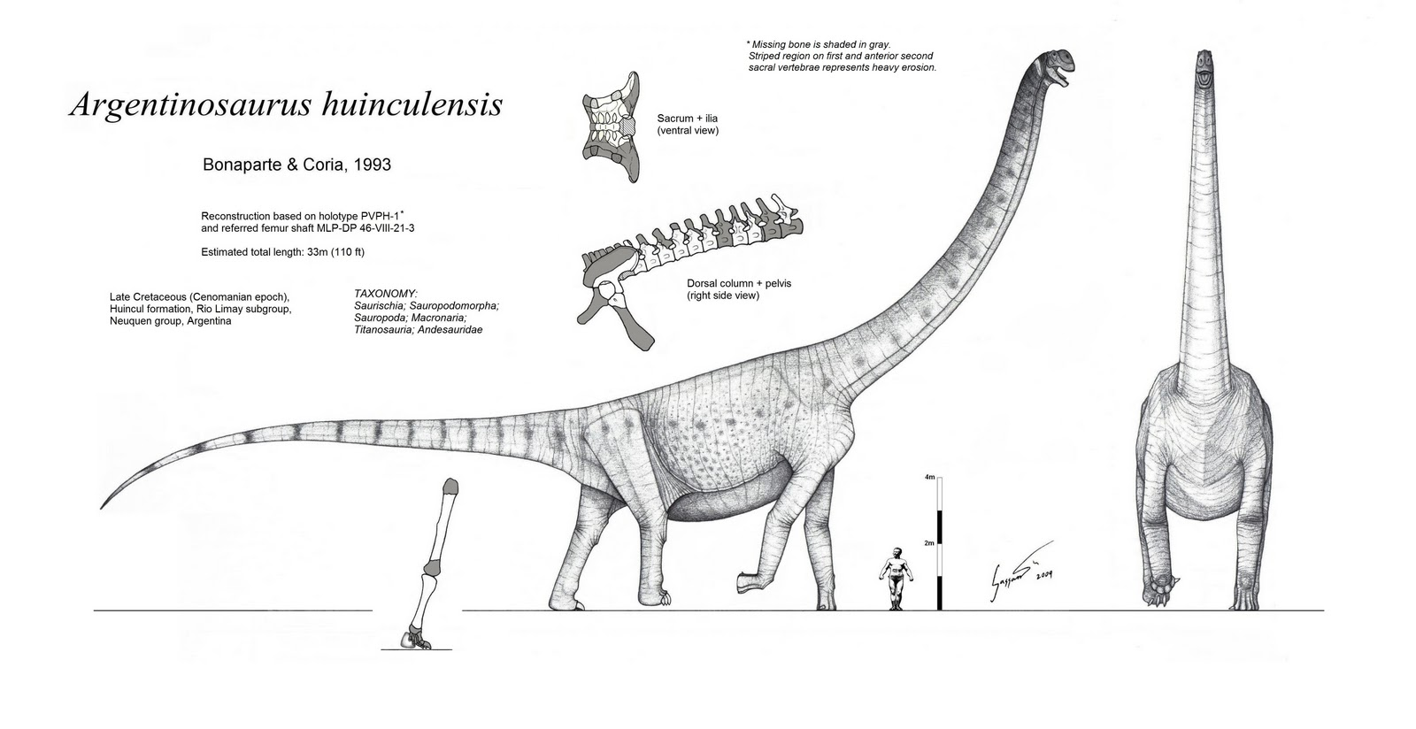 Argentinosaurus Black and White