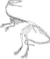 Ausmalbilder Dinosaurier Skelett   tippsvorlage.info ...