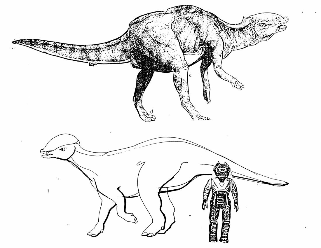 Diplodocus Kleurplaat  U2022 Kidkleurplaat Nl