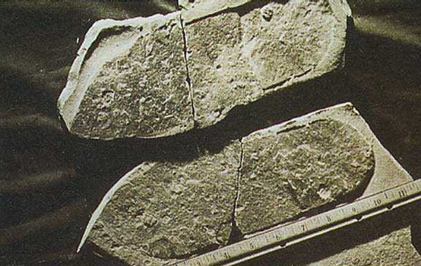 Empreinte de pied et trilobite