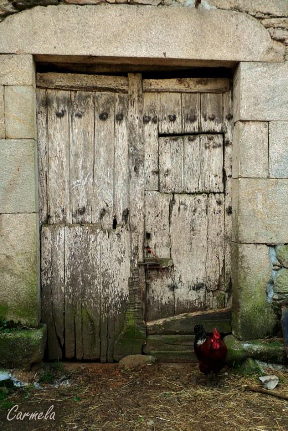 puerta-cn-gallo