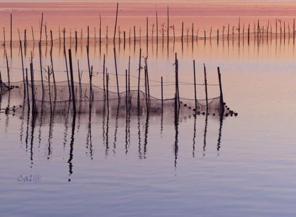 rosa lago albufera