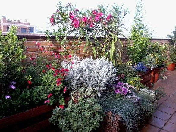 terraza macizo con flores variadas