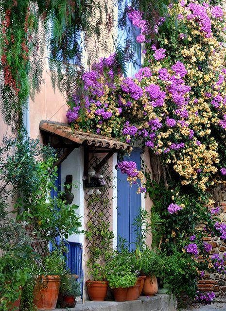 primavera buganvilla puerta azul