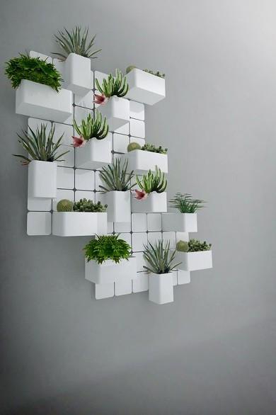 cactus-pared