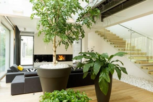 decoración bonita con plantas