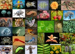 Earth-is-home-to-8.7-million-species