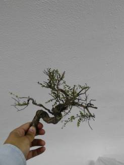 timo per fare alberi presepe