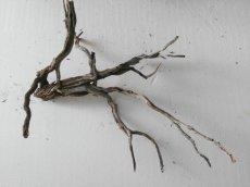 rami per creare ulivi presepe