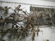 come costruire alberi di ulivo per il presepe