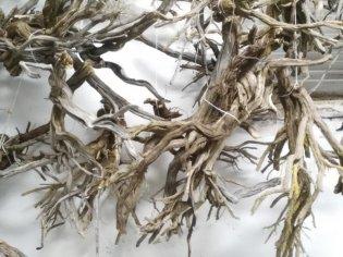 creare ulivi per il presepe