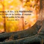 ¿Cuán agradecido estas con lo que Dios te ha dado o ha hecho? -2