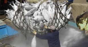 Los inspectores podrán revisar la carga pesquera de los barcos visitantes en los puertos de los países parte del Acuerdo. Foto: FAO