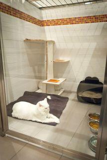 Luxury Cat Condos