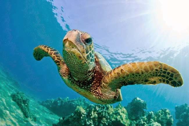 10 Facts about North Cyprus Marine Turtles 1
