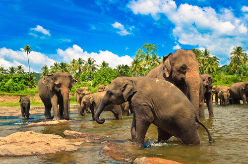 Discovering The Wild Side Of Sri Lanka National Parks 2