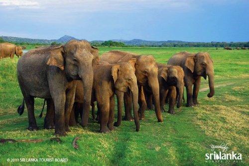 5 Top Reasons To Visit Sri Lanka 11