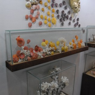 Several of the seashell displays.