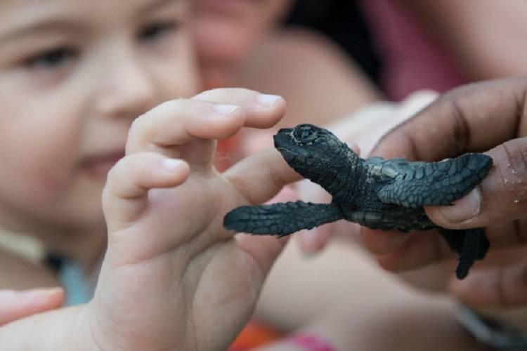 Vicenza, bimbo di 3 mesi con la meningite: infettato da una tartaruga
