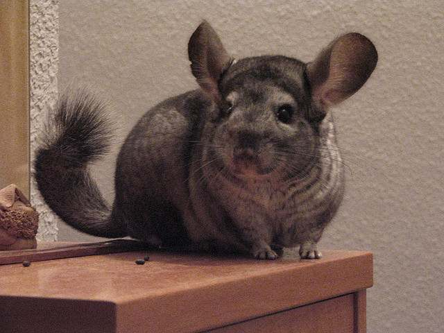 10 Small Animals That Can Make Great Pets