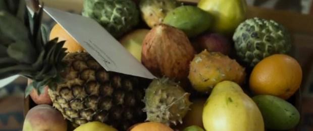 fruitbrerrwrperpewperw