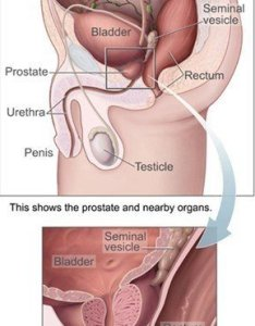Male anatomy picture showing location of the prostate gland also specific antigen psa levels and chart disabled world rh
