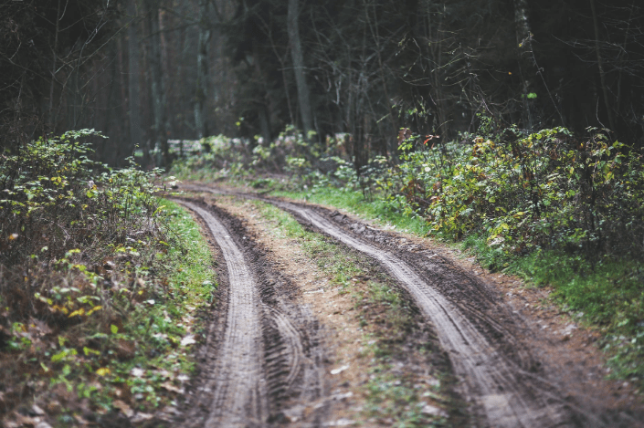 a muddy road in the forest