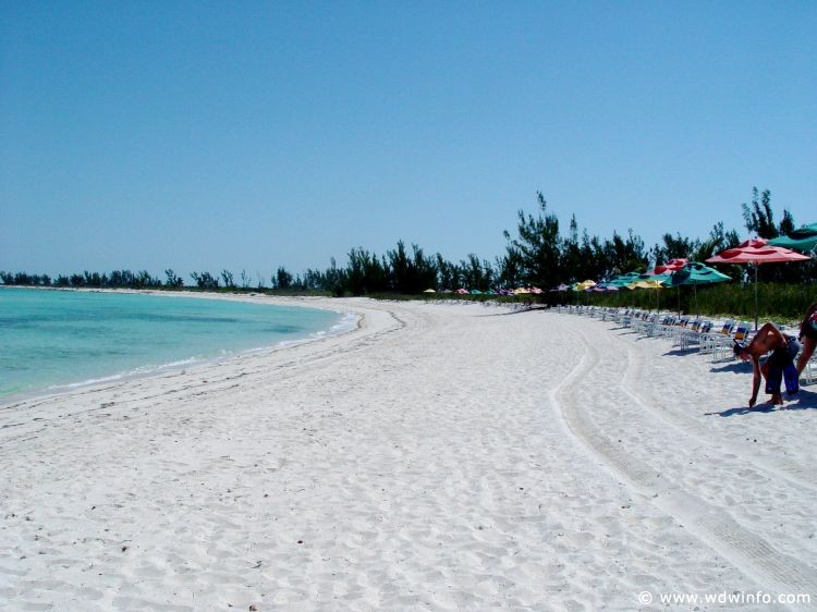 renting tables and chairs leather accent with arms castaway cay - disney cruise line's private island