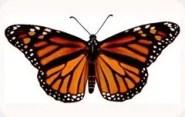 Illuminati Butterfly