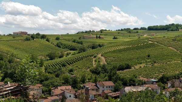 Offerte Wine Tour Monferrato