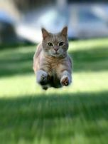 Gato Disckatus: Nuestra-historia