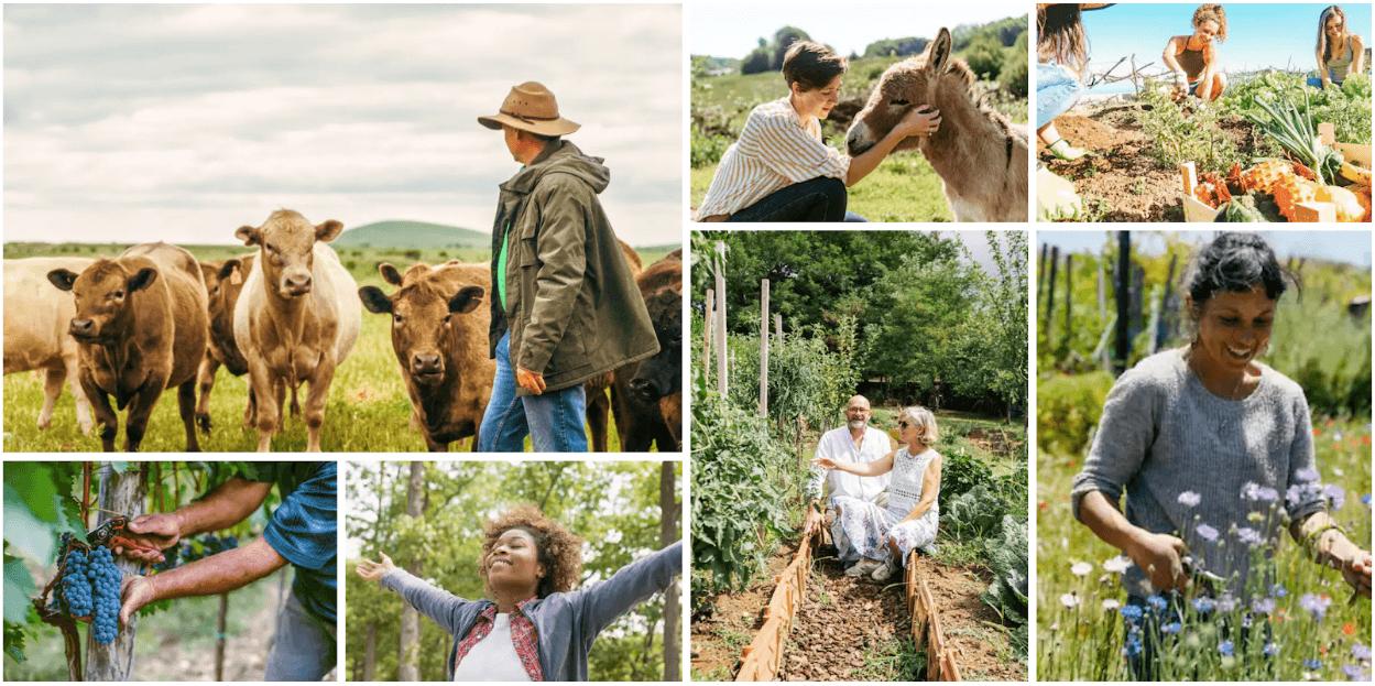 Airbnb Rural Bootcamp: una scuola di ospitalità per promuovere il turismo rurale