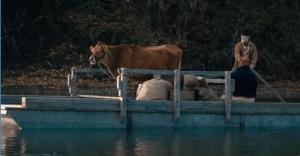 La mucca arriva sulla terraferma