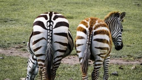Tra le curiosità sul mondo animale più indiscrete ci sono quelle che riguardano la loro cacca e altre cose che derivano dal loro lato b