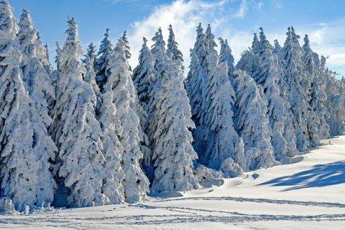 La neve ricopre tutto come se fosse glassa