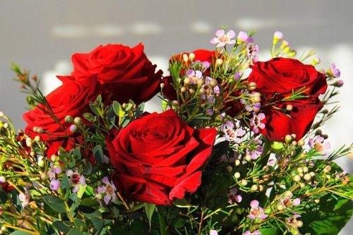 Nella storia delle rose quella rossa ha un significato importante