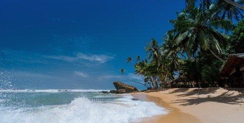 La prima curiosità sulla palma da cocco è perché vivono sulla spiaggia