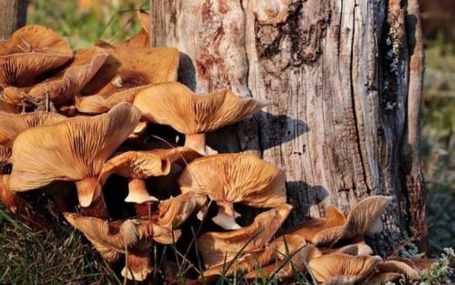 I funghi crescono di solito vicino agli alberi