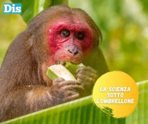 La banana è il frutto più consumato al mondo, ma è da sempre in via di estinzione