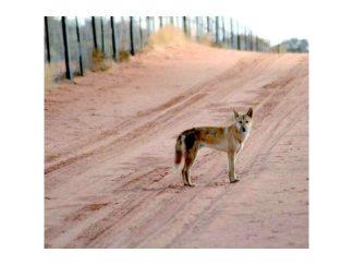 Wild Dog / Dingo Fence