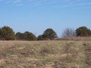 20-Acre lot in Okfuskee County Oklahoma #12