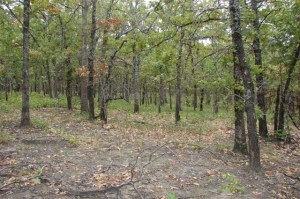 20-Acre lot in McIntosh County Oklahoma #9