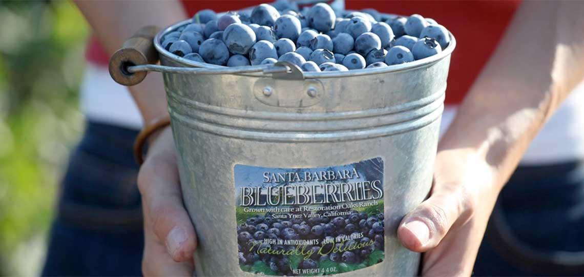 Santa Barbara Blueberries