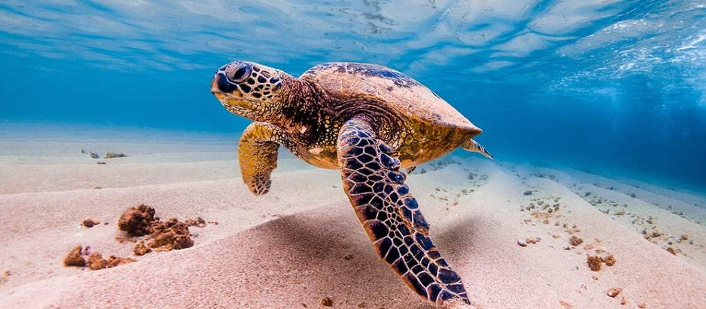 Eco Tours Big Island Hawaii