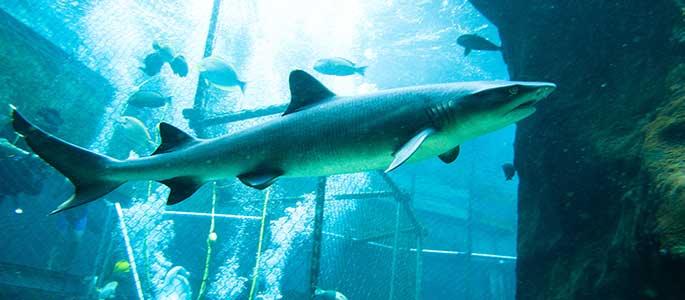 Sea Life Park Shark Trek