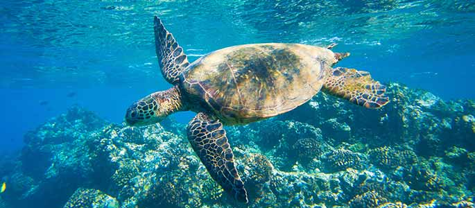 View Marine Life During Your Snorkel Adventure